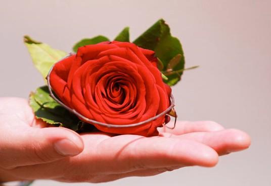 Hand_Rose